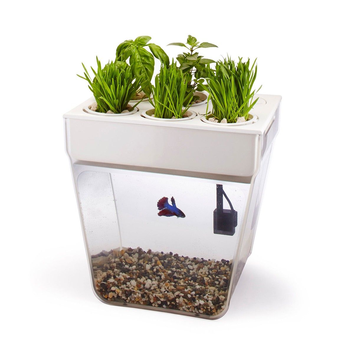 Ooh! A mini aquaponics system! This would be a great