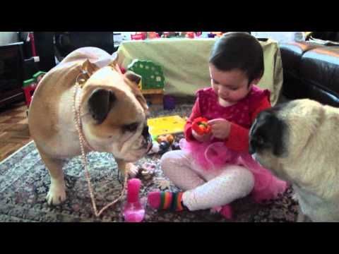 5 Reasons Bulldogs Are Awesome [VIDEOS #funnybulldog