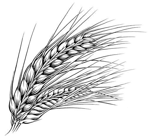 Pen Ink Illustrations Food Beverage Keithwitmercom Pattern