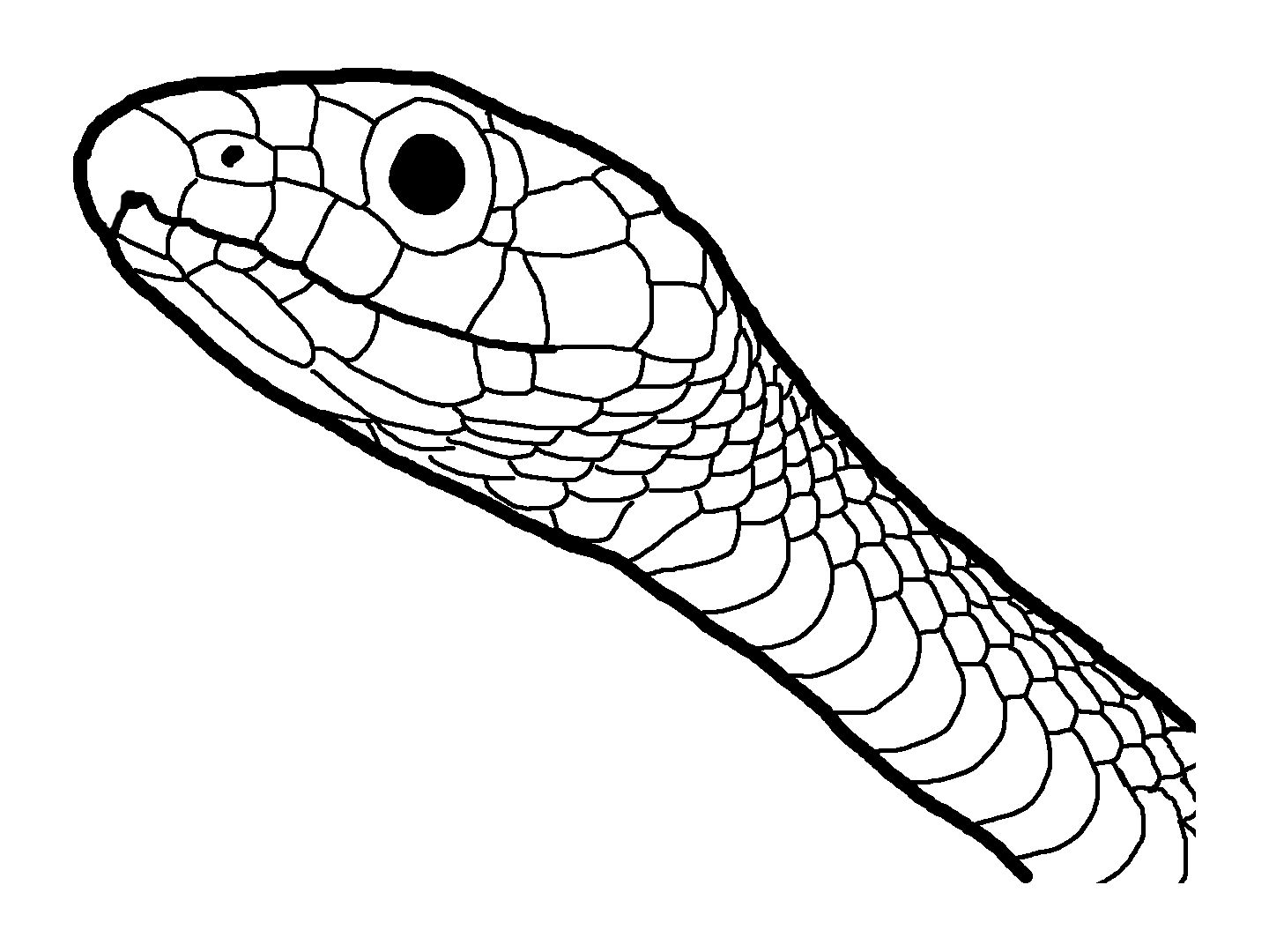 Snake Head Coloring Sheet