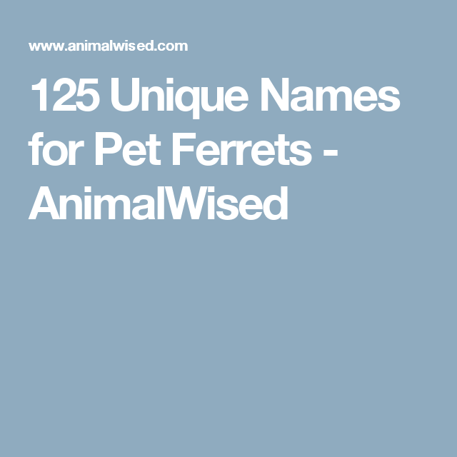 125 Unique Names for Pet Ferrets | pet names | Pet names