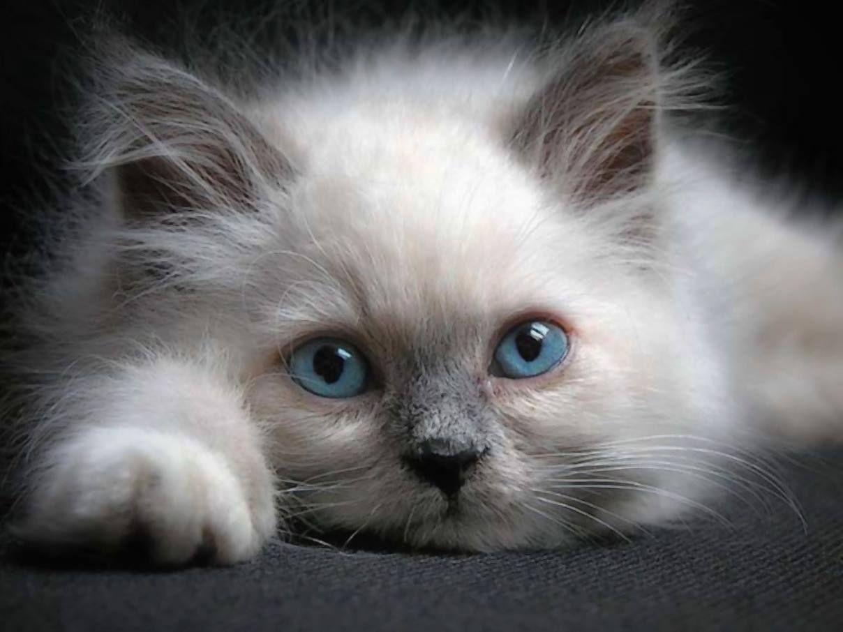Котенок скучаю картинка