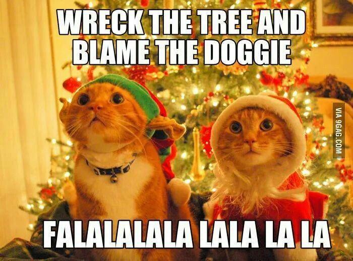 Dog Christmas Meme.Cat Dog Christmas Meme Christmas Cute Cats Animals Cats