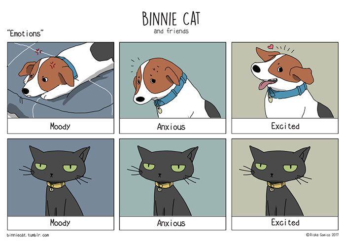 Funny Cats Vs Dogs Comics Funny Cat Memes Funny Cat Fails Dog