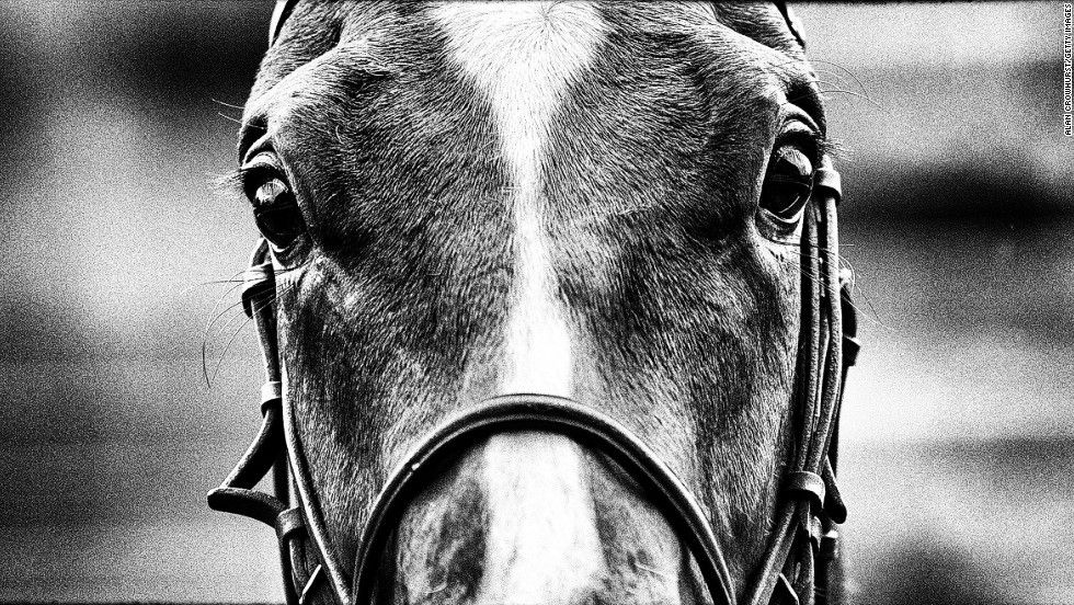 Professional horse photography black and white google search