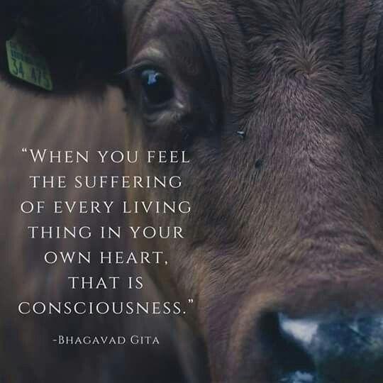 #consciousness #christmas #thanksgiving #food #cooking #animalagriculture #farmlife #Cowspiracy #animals #animalrights #animalliberation #bacon #vegan #govegan #veganquotes