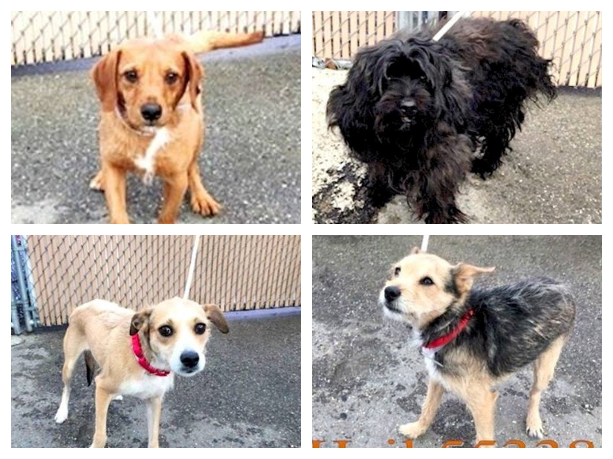 Eight Dogs Found Abandoned This Most Adorable Little Gang Of