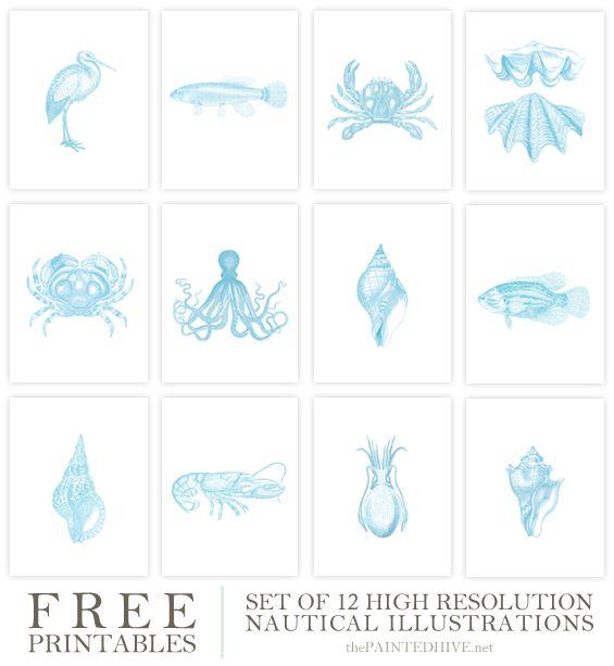 Free Printable Vintage Coastal Illustrations (The Painted Hive) -   24 nautical decor printable ideas