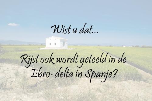 #Taalweetjes I TVcN Tolk- en Vertaalcentrum #spanje #ebrodelta #rijst