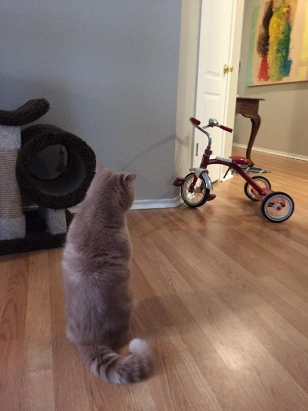 My getaway bike!