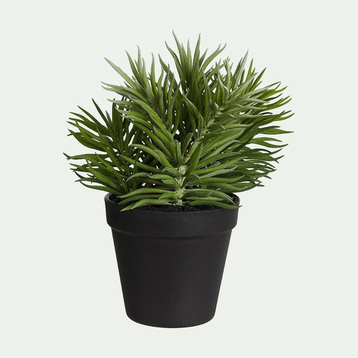 Plante Ornementale Cette Plante Grasse Artificielle Insufflera