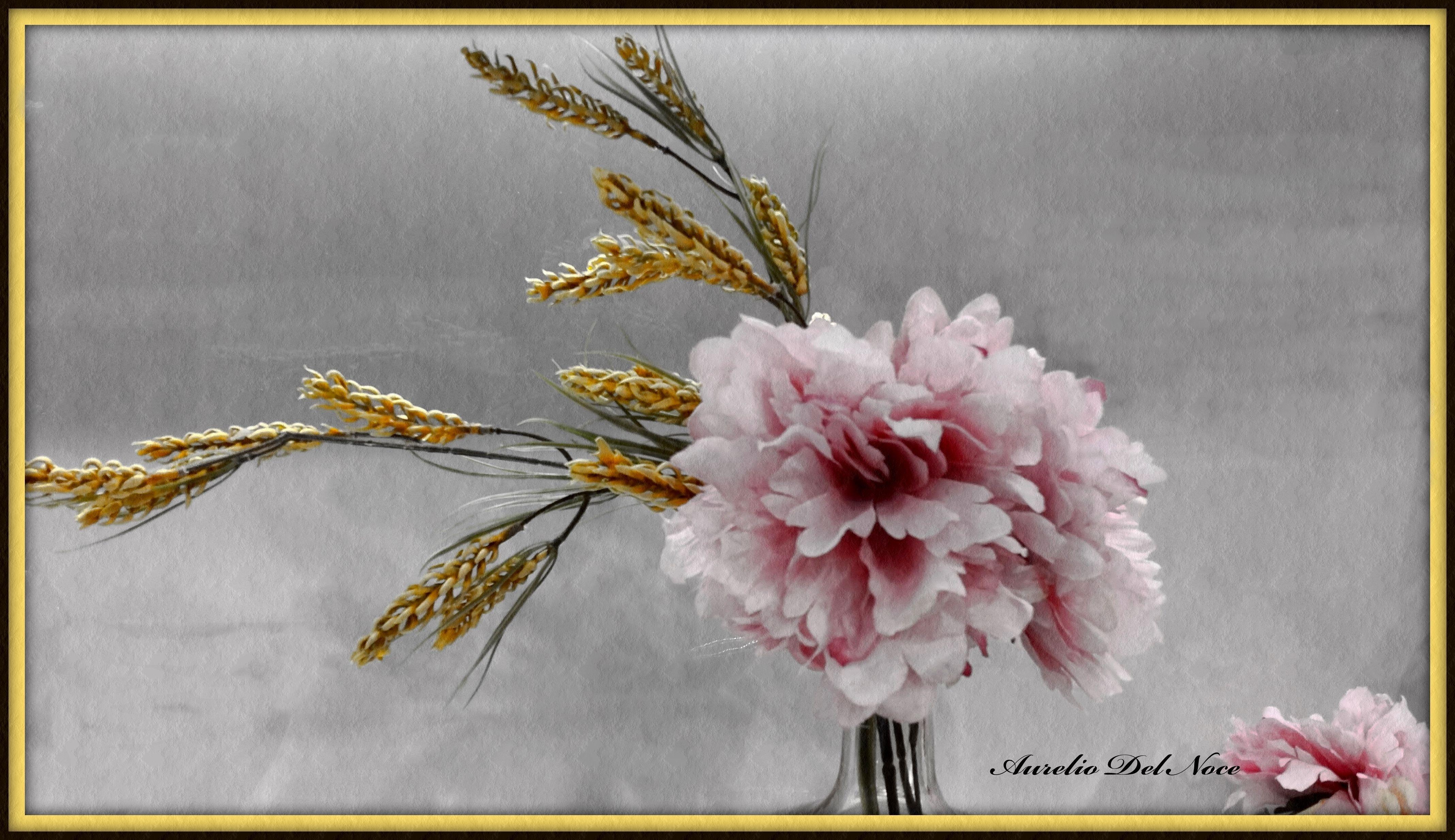 """""""Fiore del mio giardino"""""""