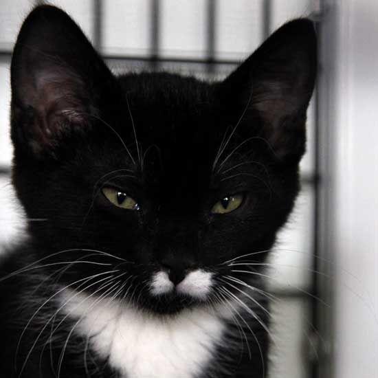 Adopt A Pet Pet Adoption Cat Adoption Animals