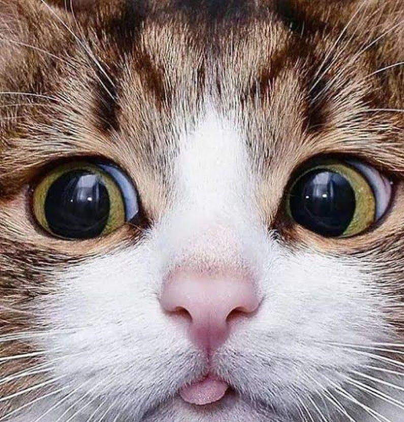 4cd6c11ce Foto Mačiatka, Pes Mačka, Veselé Mačiatka, Rozkošné Mačiatka, Mačacie  Umenie, Crazy
