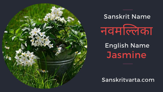 50 List Of Flowers Name In Sanskrit Language And Hindi With Pictures Sanskrit Learnsanskrit Sanskritvarta Flowersname In 2020 Sanskrit Fruit Names Sanskrit Names