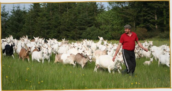 Visit Goat Farm in the West of Ireland Goat Cheese