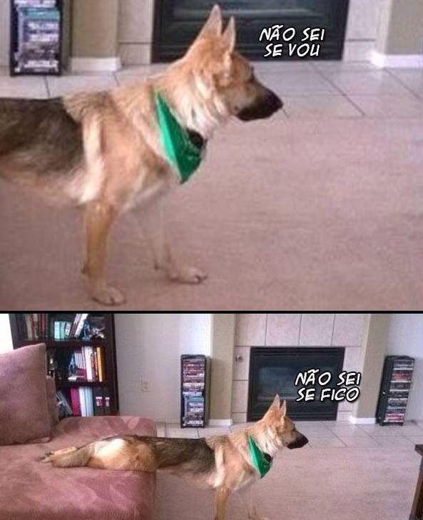 Cão dog