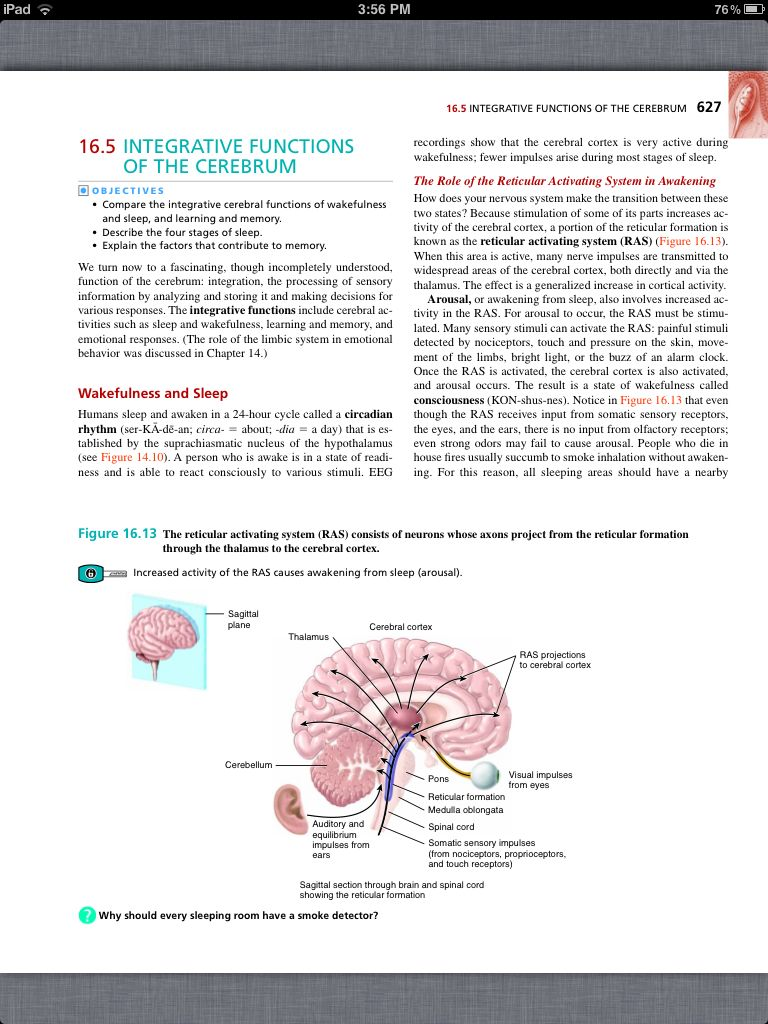 Hermosa Anatomy And Physiology Coloring Workbook Chapter 16 Patrón ...