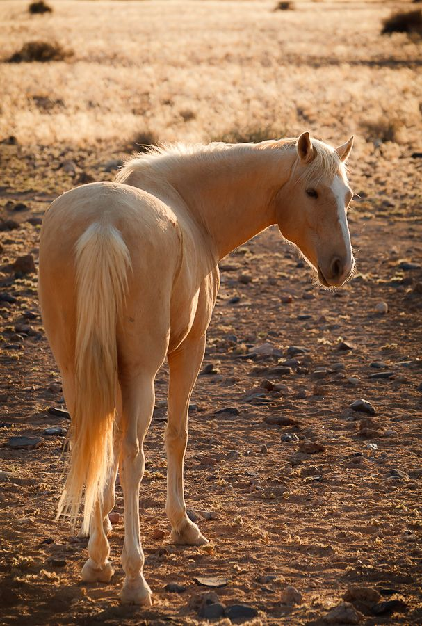 """Wild horse of Namibia by Fabrizio Fenoglio. """"Horses are not originally native of Namibia, but were probably introduced by Germans during their occupation of South West Africa."""