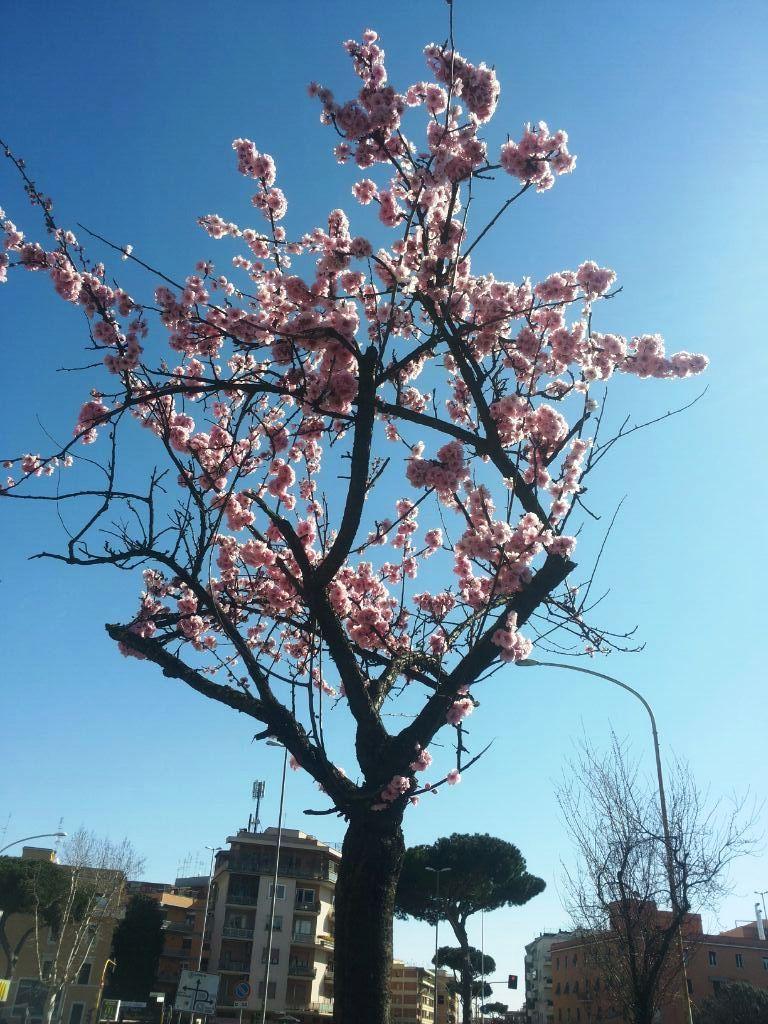 quando pensi che un albero sia finito, eccolo fiorire .... succede anche alle persone #buongiorno #mattinieri