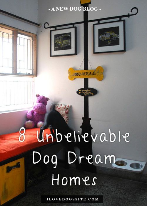 Pin By Tammy Dingler On Must Love Dogs Dog Room Design Dog