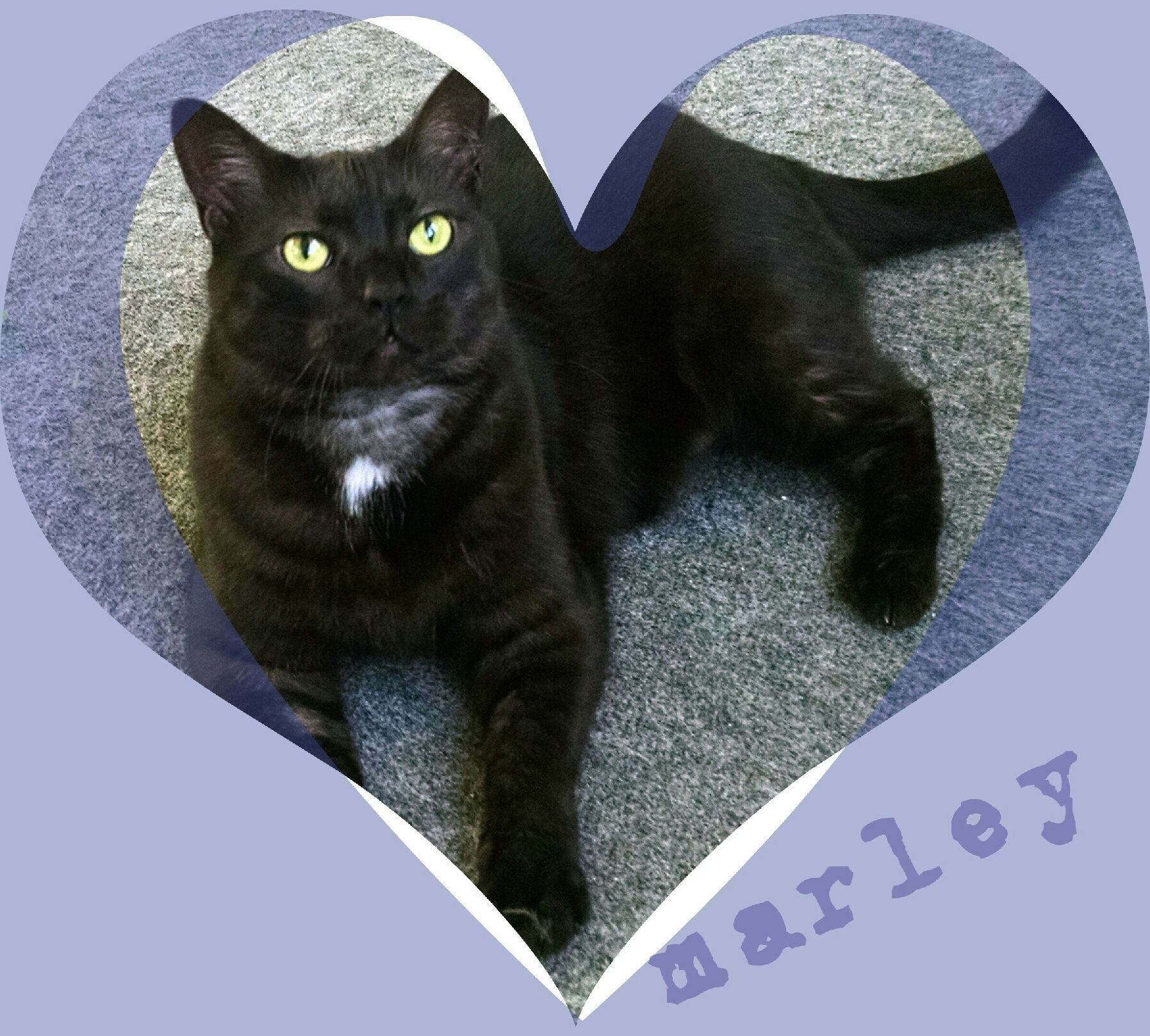 Adopt Marley bestcatever on Animal help, Cats, Pets