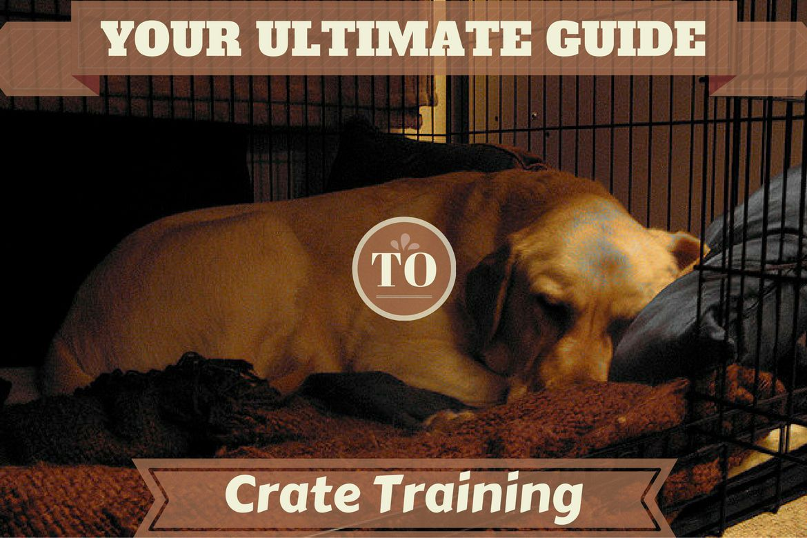 Crate Training The Ultimate Guide Crate Training Dog Training