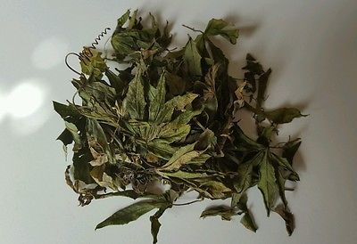 Passion Flower Incarnata Passiflora Caerulea Blue Dried Herbal Leaf Tea Passion Flower Herbal Leaves Loose Leaf Tea