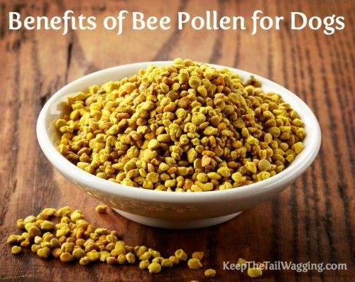 Benefits Of Bee Pollen And Honey For Dogs Keep The Tail Wagging Bee Pollen Raw Dog Food Recipes Cancer Fighting Smoothies Recipes
