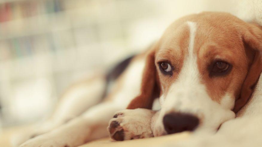 Company recalls organic dog food that may contain