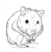 how to draw a dwarf hamster drawing tutorial