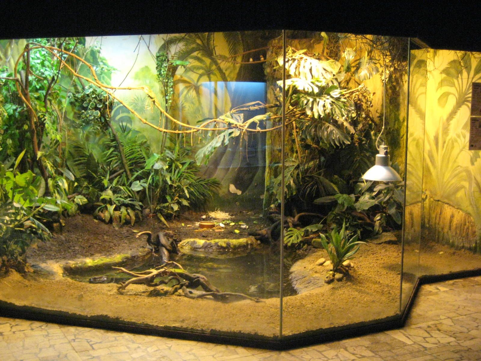 Reptile Habitat Patio Living room   someday