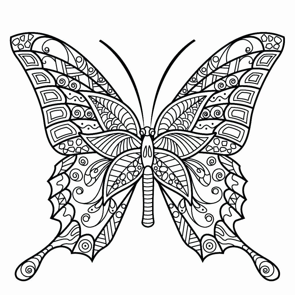 Spring Coloring Pages For Adults Awesome Coloring Pages Fabulous Butterfly Coloring Pages For In 2020 Insect Coloring Pages Butterfly Coloring Page Butterfly Printable