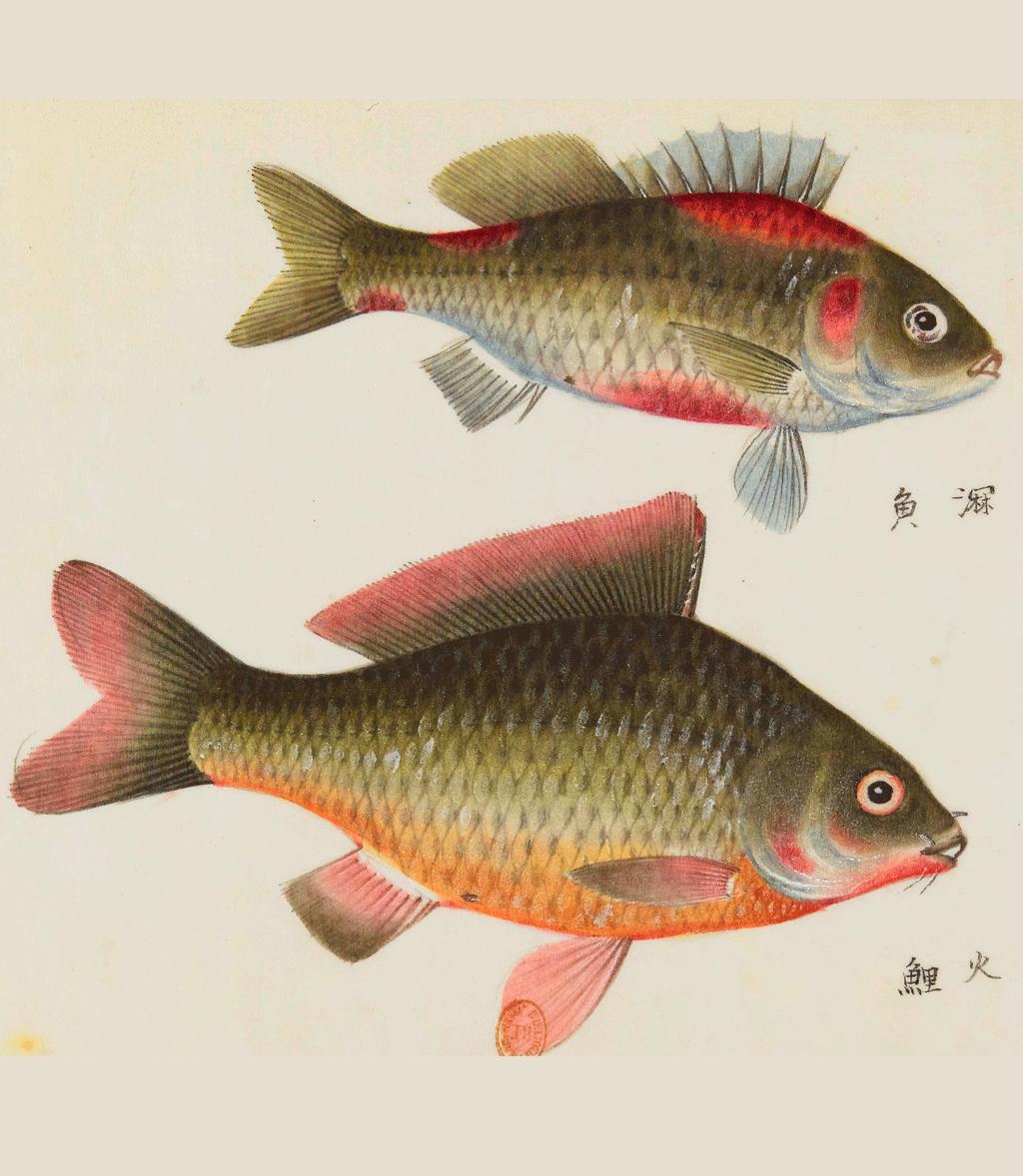 Aller poissons datation recherche