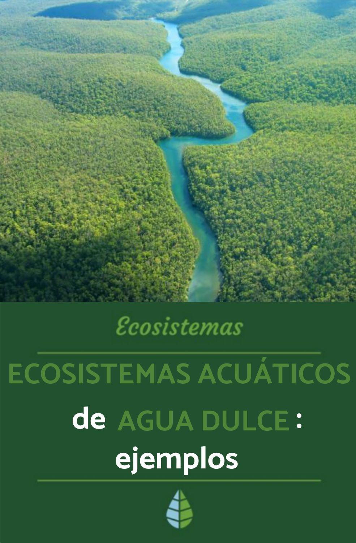 Ecosistemas Acuáticos De Agua Dulce Ejemplos Y Características Resumen Ecosistema Acuático Ecosistemas Agua Dulce