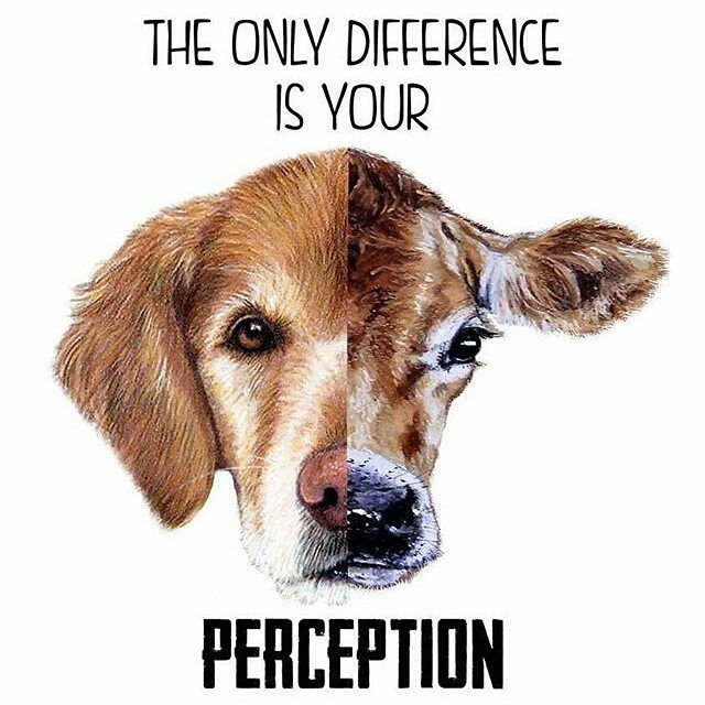 Truth! #govegan #vegansofinstagram #mercyforanimals #loveanimals #repost  @pauline.dagonneau ・・・ For the animals ❤️