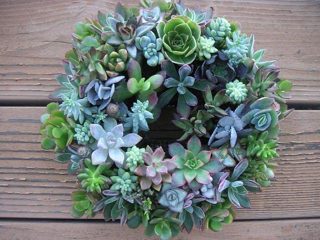 A bountiful succulent wreath.