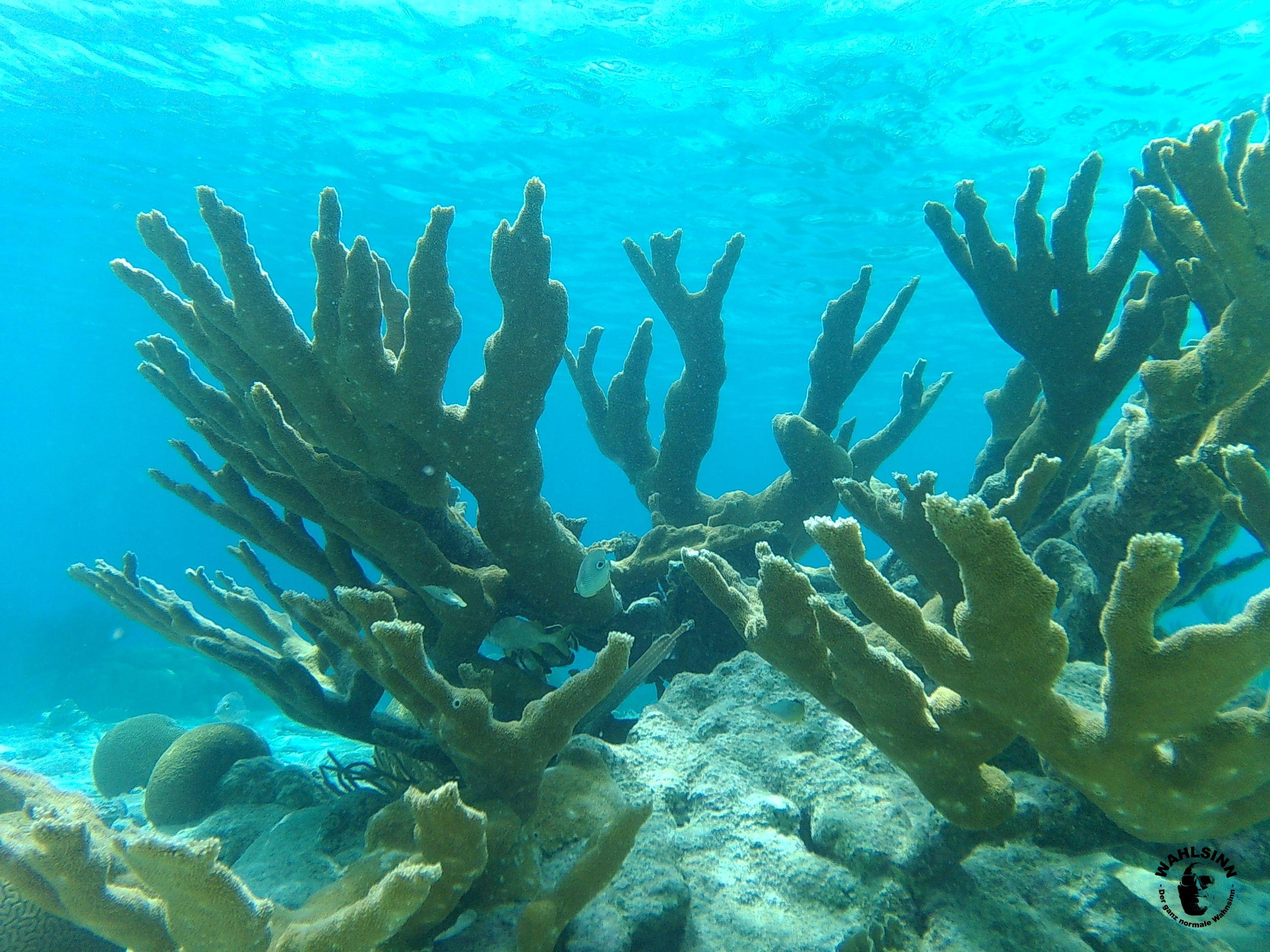 Bonaire - Die Korallenwelt auf Bonaire bzw. unter der Wasseroberfläche ist einfach nur WOW