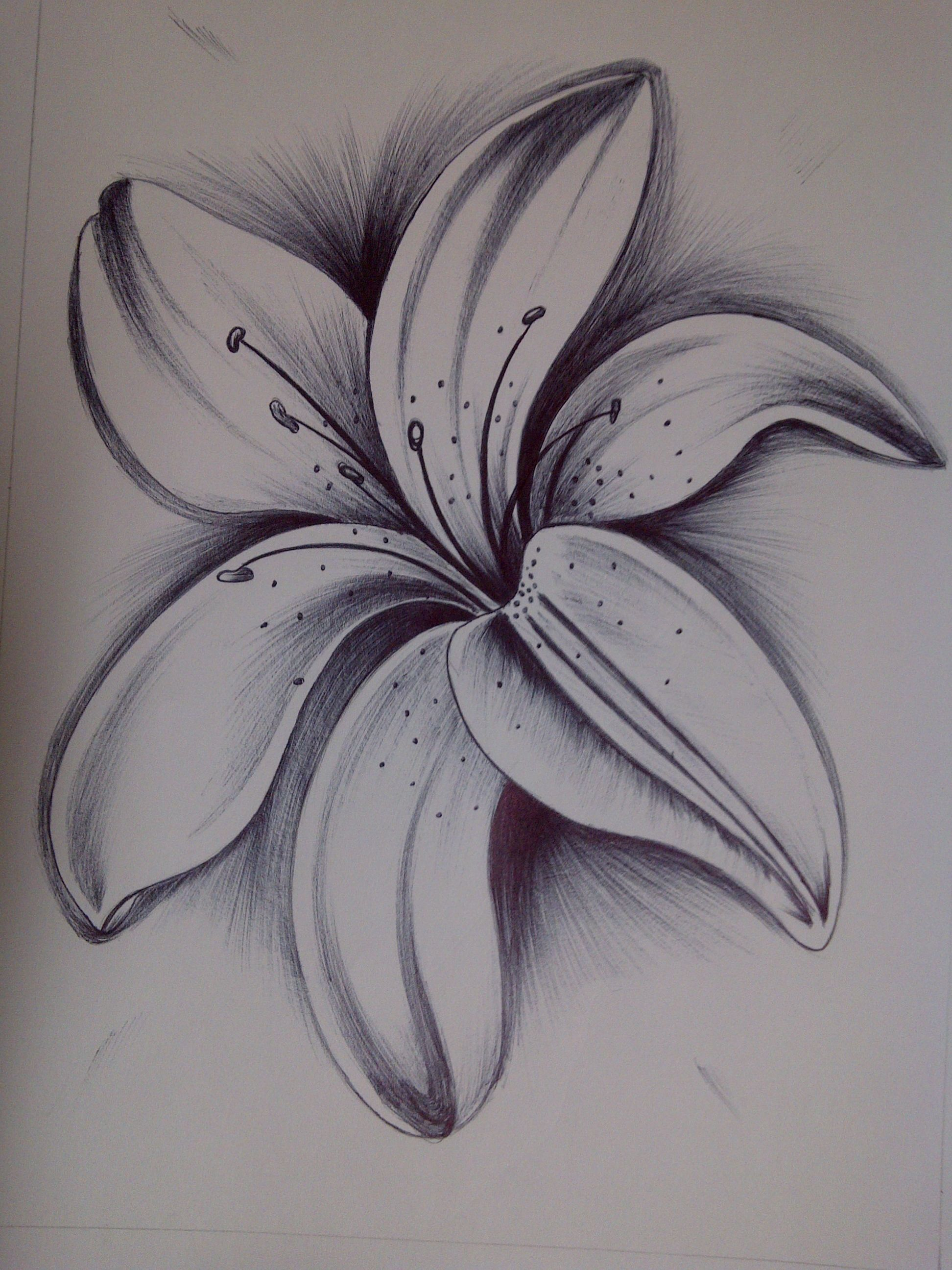 Pin by DrVibha Babbar on Sketches Pencil drawings of