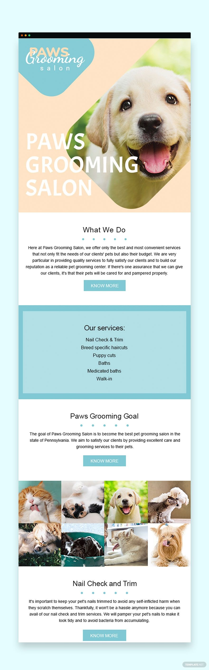 Pet Grooming Email Newsletter Template Psd Pet Grooming Pet Grooming Salon Email Newsletter Template