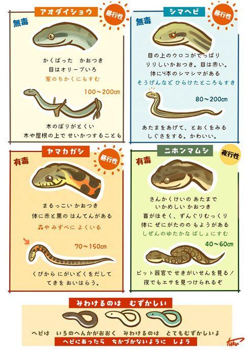 ヘビの見分け方 アオダイショウ 動物 図鑑 シマヘビ