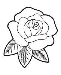 rosenbilder zum