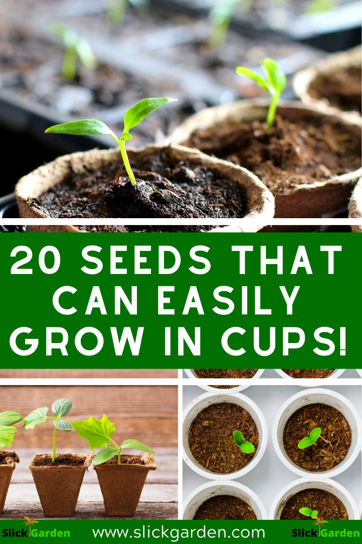 20 seeds that can grow easily in cups