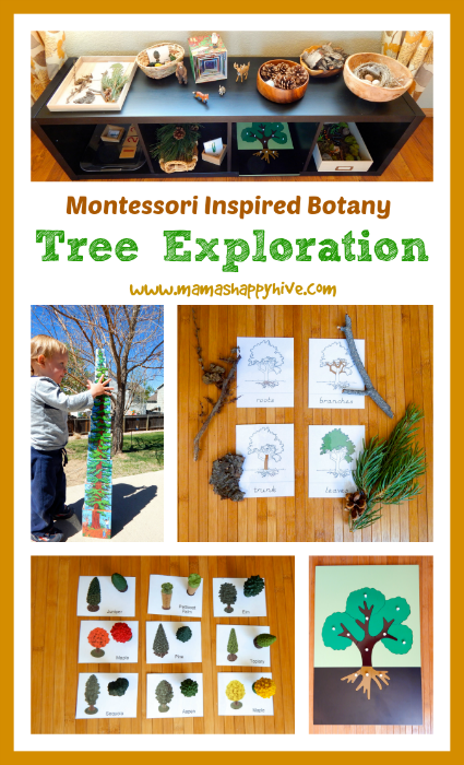 A Montessori inspired botany tree exploration unit, with 10 kid friendly educational activities for the 12 Months of Montessori Learning series. - www.mamashappyhive.com