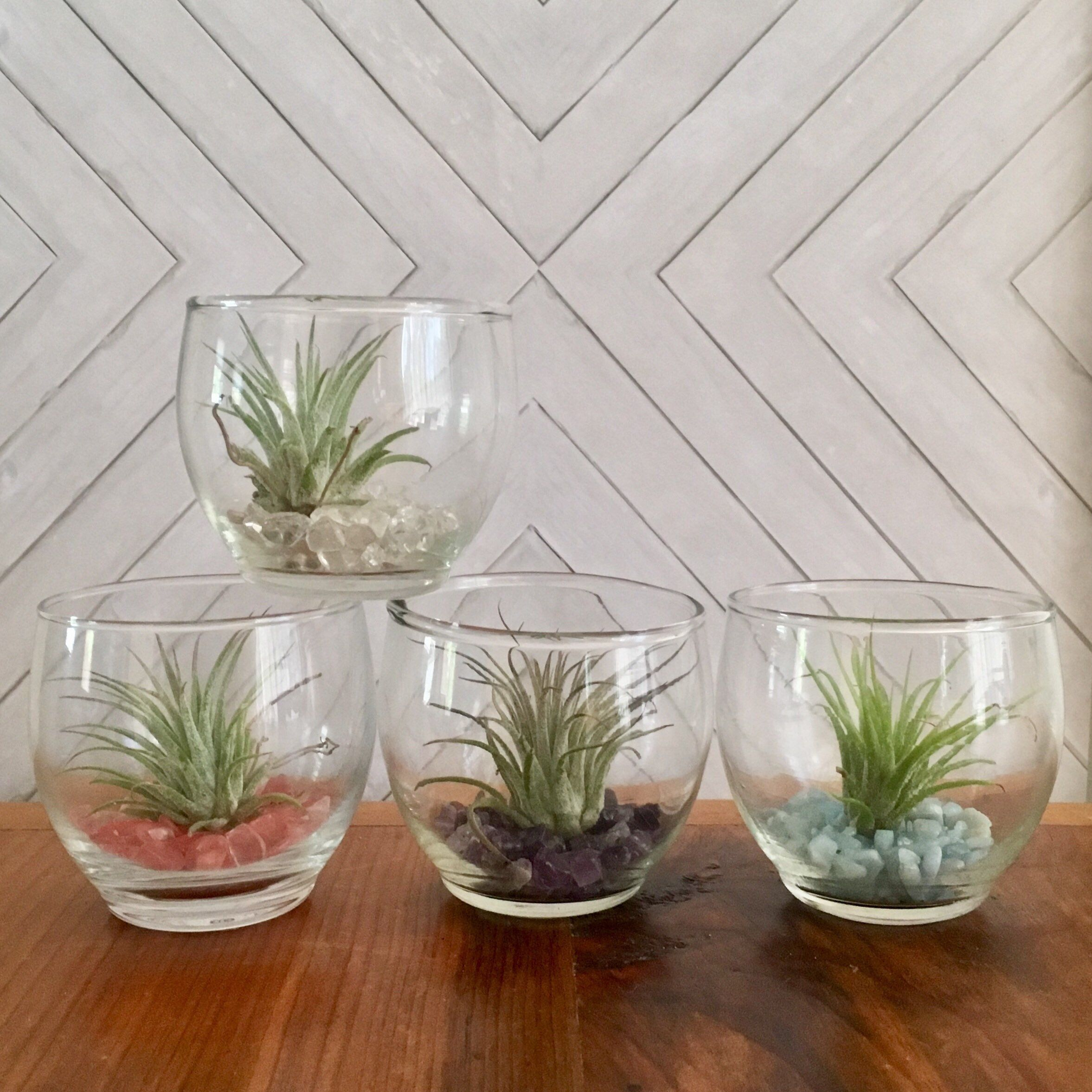 Pin By Cactusgoldfish On Tillandsia Air Plants Pinterest Gifts