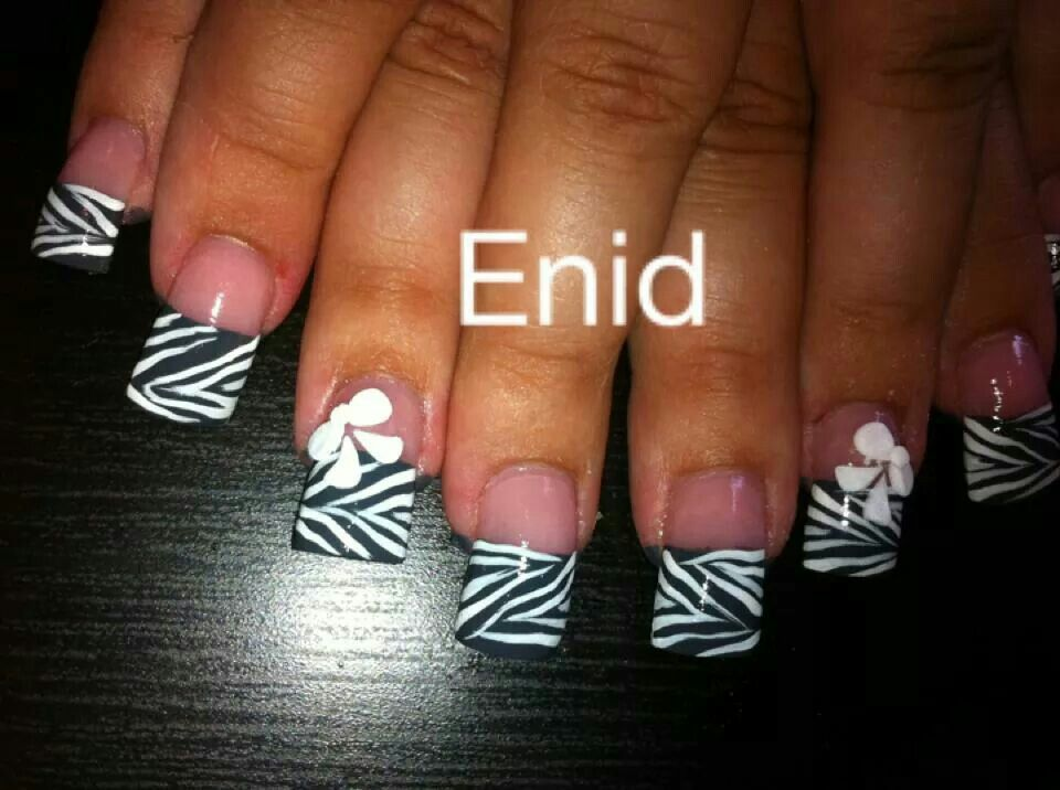 Black and white zebra and cute little bows