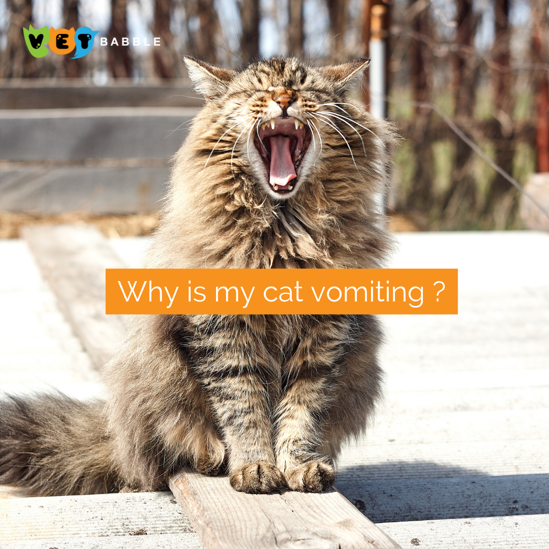 Why Is My Cat Vomiting? What Is Normal and What Is Not in