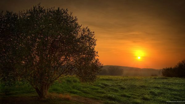 Free Download Natural Scenery Picture The Rising Sun Things Are Added Golden Light Green Grass And Pr Landscape Wallpaper Sunset Landscape Scenery Pictures Sun rising wallpaper free download