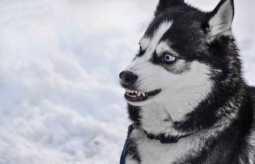 10 Most Dangerous Dog Breeds In The World Dangerous Dogs Dogs