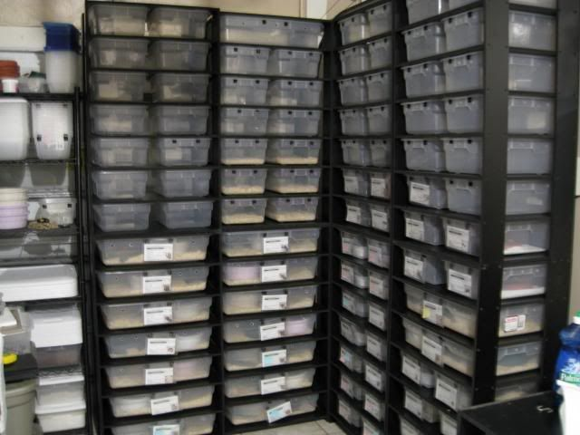 Ssscales Diy Xpvc Racks Leopard Gecko Diy Reptile Gecko Habitat